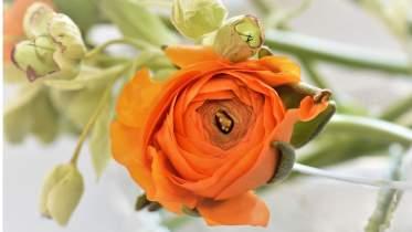 Unternehmen Blumen Timmermann